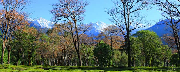 palampur honeymoon trip