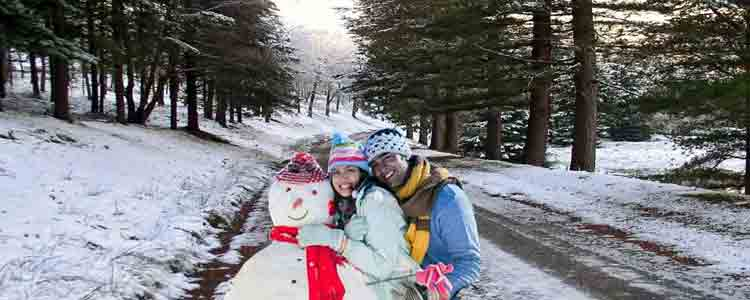 shimla honeymoon tours